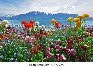 flower scenery images stock photos vectors shutterstock