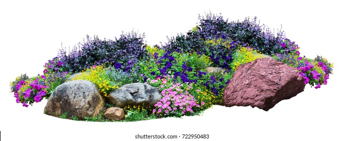Natural flower and stone in garden isolated on white background. Garden flower part