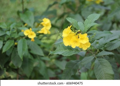 natural flowers in holy place of govardhan eco village, mumbai