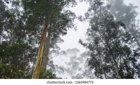 Natural foggy forest scenery in Dusun Bambu, Lembang, Bandung, West Java, Indonesia. Dusun Bambu is a popular tourist destination spot.