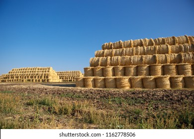 Natural food crops harvest in autumn. Yellow dry haystacks in agricultiral field on farm under blue sky