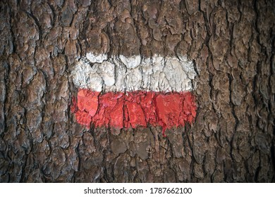 Natural footpath sign on bark. Closeup of red and white paint on a tree in order to indicate the path