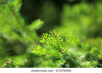 Natural forest background with green tree