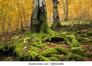 Natural forest in beautiful autumnal colors.