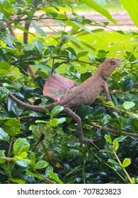 Natural forest chameleon