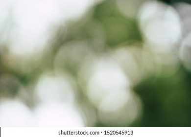 Natural forest green bokeh background