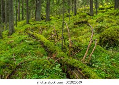 Natural forest landscape in FInland