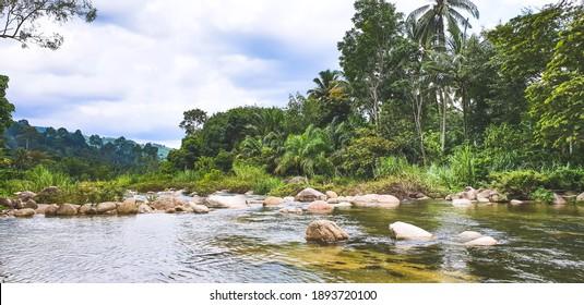 Natural forest river wind flow, scene of beautiful landscape.