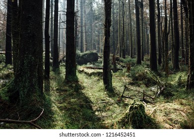 Natural Forest Situation