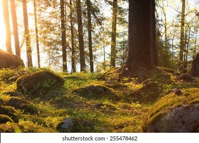 Natural forest at sunset