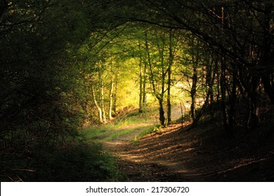 natural forest tunnel road