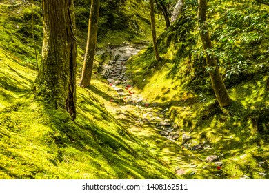 Natural forest Walkways. Walkways with green tree and mosses spread throughout the area. The lush green walkway with tree trunk and moss forest covered all ground. Forest park in Kyoto, Japan.