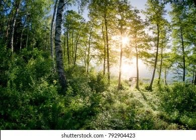Natural forest in the warm light of the morning sun
