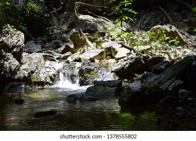 Natural forests and watersheds