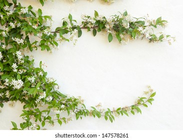Natural frame of jasmine flowers on white wall.