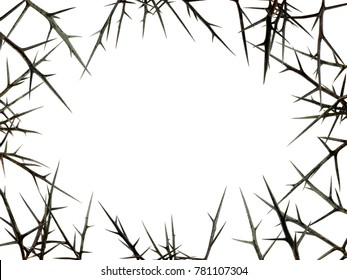 natural frame from sharp thorns isolated on white background. free space for text