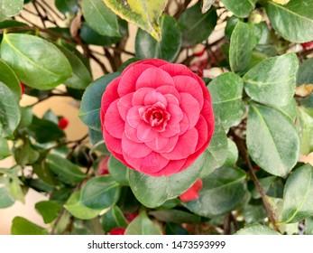 natural and fresh flower in capture my camara focuse