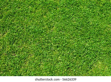 Natural fresh grass  background and texture