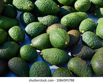Natural freshly picked Avocado fruit  arranged for sale display display in a market shop