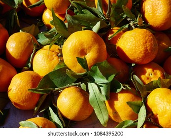 Natural freshly picked Mandarines Tangerine Clementine Avocado fruit  arranged for sale display in a market shop