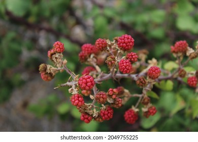 Natural fruit at the mines of Vavdos - Shutterstock ID 2049755225
