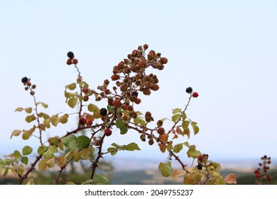 Natural fruit at the mines of Vavdos - Shutterstock ID 2049755237