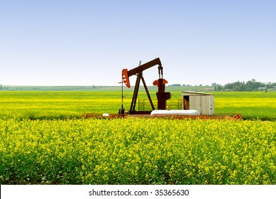A natural gas pump jack in an Alberta Canola rapeseed field.