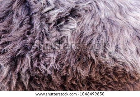 Natural, genuine, rare breed sheepskin rugs fleece details view from top. Grey texture shows different type of fluffy hair. Full frame macro horizontal background crop.
