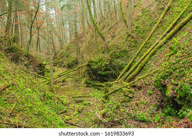 Natural gorge, wilderness in the forest