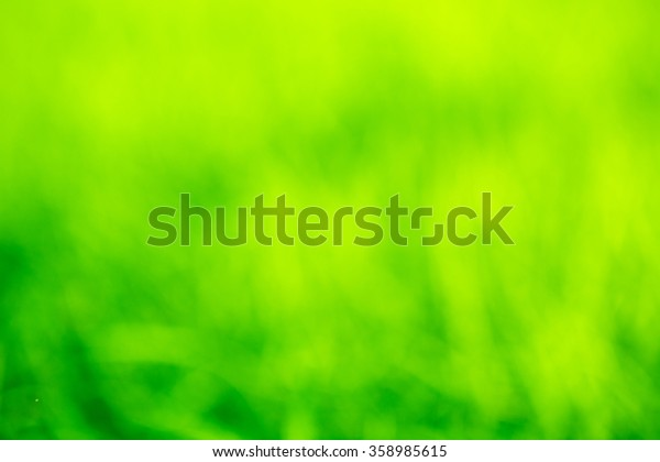 Natural grass green blurred background.