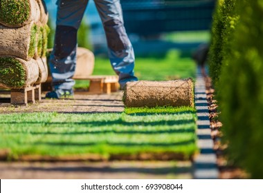 Natural Grass Lawn Installation. Grass Turfs and the Professional Gardener in the Garden.