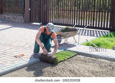 Natural Grass Turf Professional Installer. Gardener Installing Natural Grass Turfs Creating Beautiful Lawn Field.