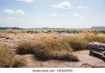 Natural grasses on Ubirr Rock with stunning view of the natural landscape in Kakadu, Australia