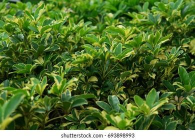 Natural green 2