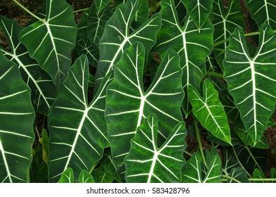 Natural green - Shutterstock ID 583428796