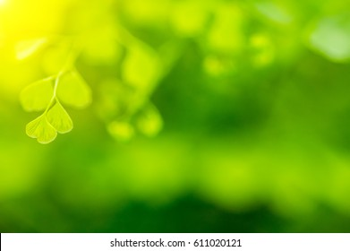 Natural green background, the bokeh and depth of field (DOF) effect.