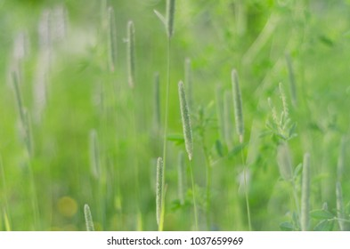 Natural green background of fresh summer grass