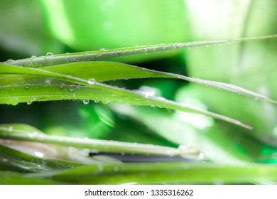 Natural green background with leaf