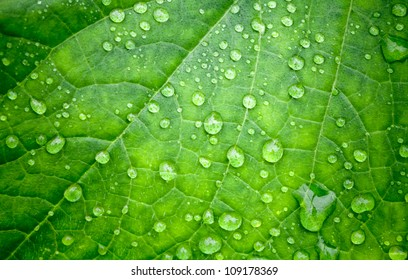 Natural green background with leaf and drops of water