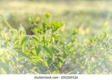 Natural green background: summer grass