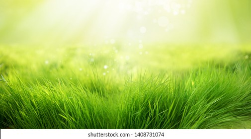 Natural green background of young juicy grass in sunlight with beautiful bokeh. Lush grass close-up in nature outdoors, wide format with copy space.