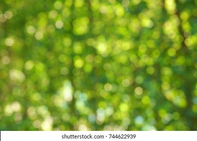 Natural green blur background in sunlight ,Abstract round bokeh from green leaves, blurred background