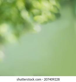 Natural green Bokeh, blurred bokeh