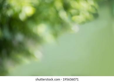Natural green Bokeh, blurred bokeh background