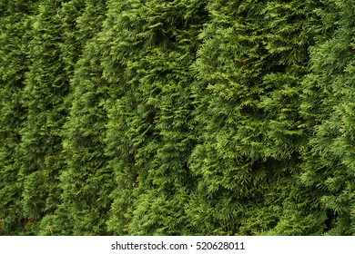 Natural green fence background