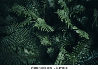 Natural green fern