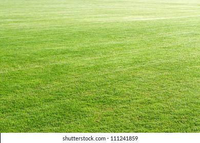 Natural green grass field background