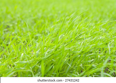 natural green grass on field