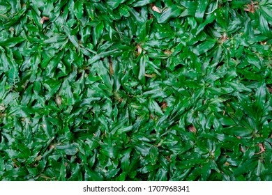 rumput hijau images stock photos vectors shutterstock https www shutterstock com image photo natural green grass rumput hijau 1707968341