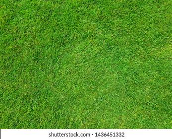 Natural green grass top view sport background texture concept.